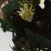 Biflora